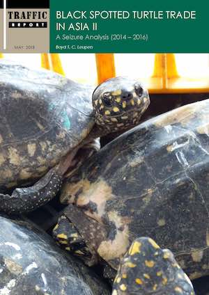 Black spotted turtle trade in Asia II: a seizure analysis