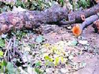 We need freedom to fell trees: PWD