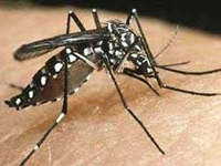 Dengue: Private hospitals warned against deviating from protocol