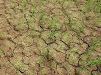 Govt appoints taskforce for block-level drought report