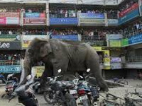 Elephant goes on rampage in Siliguri, smashes cars, homes