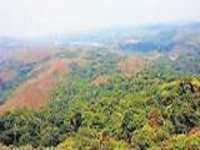 8,037 ha forestland encroached in State