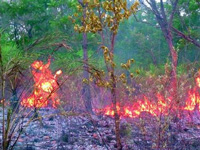 Forest fire eats up most of Telangana's green cover