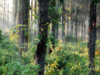 Encroachers eating into forest cover: RTI