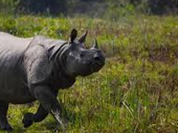 NGT asks Assam govt to release funds for Kaziranga parka