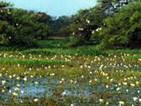 Resolution must for saving wetlands: Wildlife board