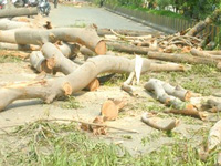Rampant timber smuggling in Upper Dehing Forest Reserve causes concern