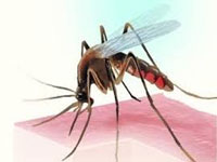 Dengue beats rains in race