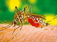 Malaria scare in Mewat, over 1,000 test positive