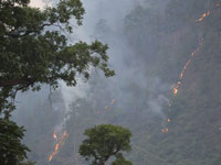 Fresh forest fires in Uttarakhand destroy 180 hectares of green cover