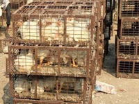 Caged poultry items unsafe for humans
