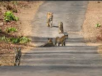 MoEF to inspect road site in tiger corridor